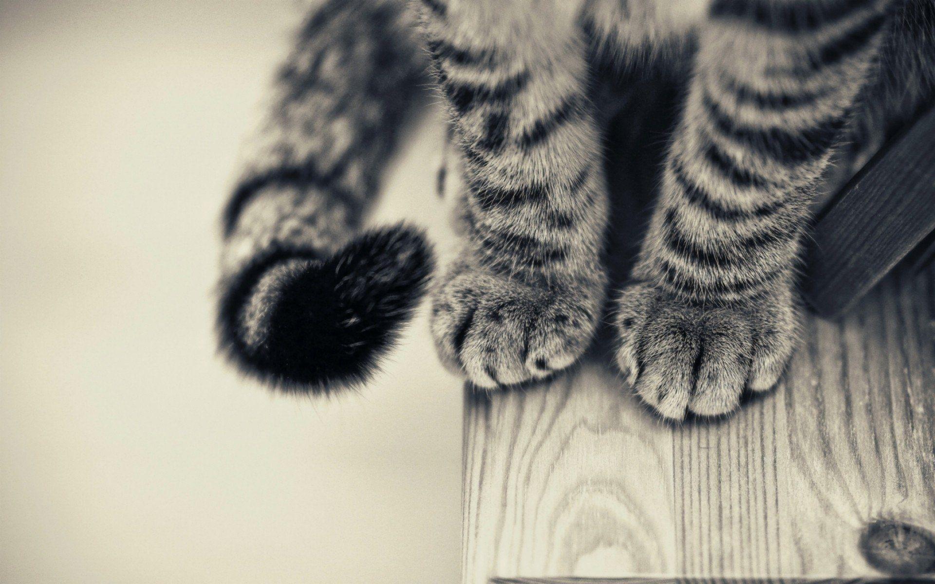 Kedi Wallpaper