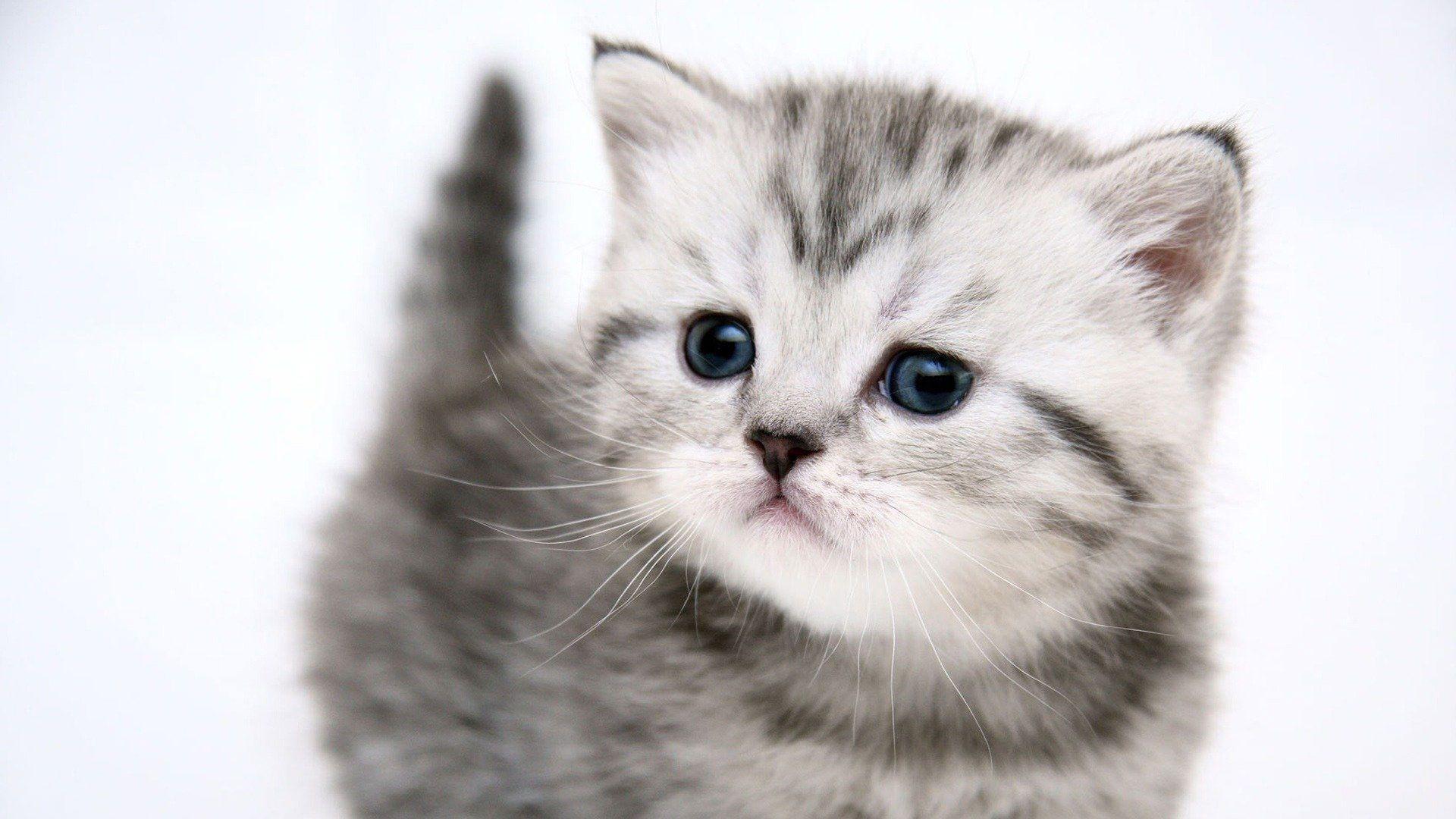 Kedi iphone Duvar Kağıdı